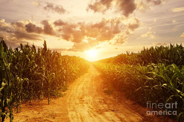 Wall Art - Photograph - Skyline And Corn Field by Zhu Difeng