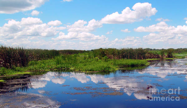 Skyscape Reflections Blue Cypress Marsh Near Vero Beach Florida C6 Art Print