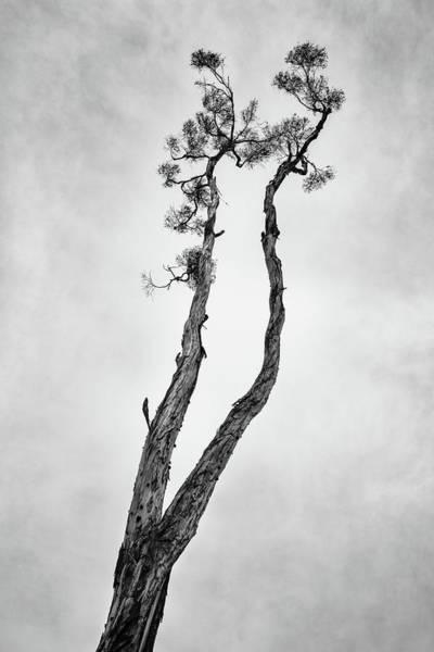 Wall Art - Photograph - Skyward by Joseph Smith