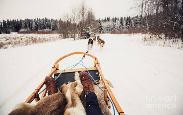 Sleigh Wall Art - Photograph - Sled Dogs Pulling A Sled Through The by Andrey Bayda