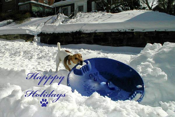 Photograph - Sledding Dog Happy Holidays by Marvin Bowser