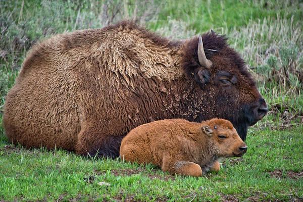 Photograph - Sleep Time by Leland D Howard