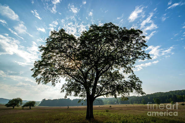 Wall Art - Photograph - Sleeping Bear Dunes Lone Tree by Twenty Two North Photography