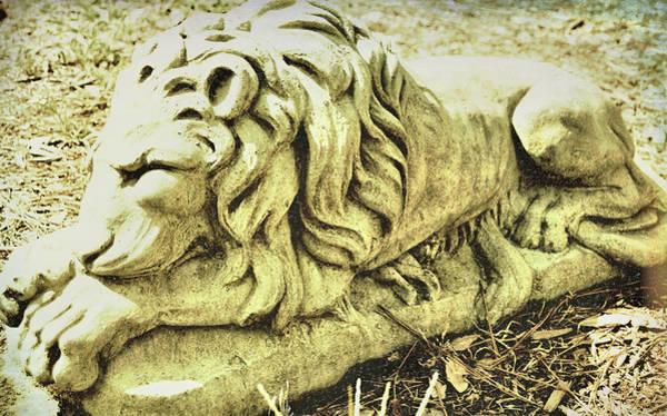 Photograph - Sleeping Beast by JAMART Photography