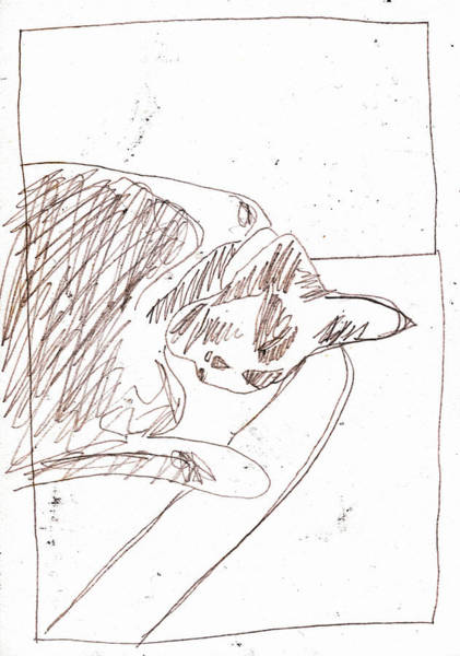 Drawing - Sleeping Cat by Artist Dot