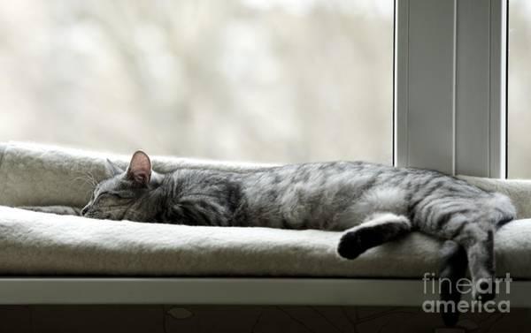 Wall Art - Photograph - Sleeping Cat Near Window On Sunny Day by Renata Apanaviciene