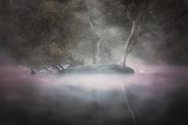 Photograph - Sleeping In The Mist by Chris Fletcher