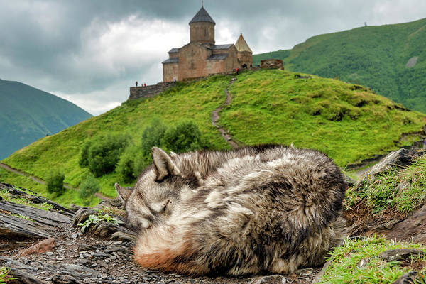 Photograph - Sleeping Near The Gergeti Trinity Church by Fabrizio Troiani