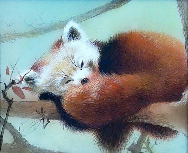 Painting - Sleeping Red Panda by Alina Oseeva