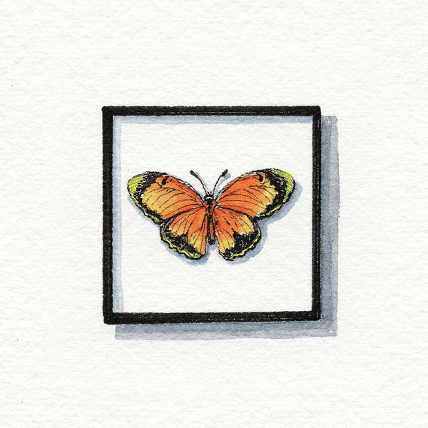 Wall Art - Painting - Sleepy Yellow Sulphur Watercolor Butterfly Eurema Nicippe  by Irina Sztukowski