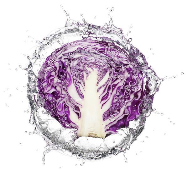 Photograph - Slice Of Purple Cabbage Splash by Chris Stein