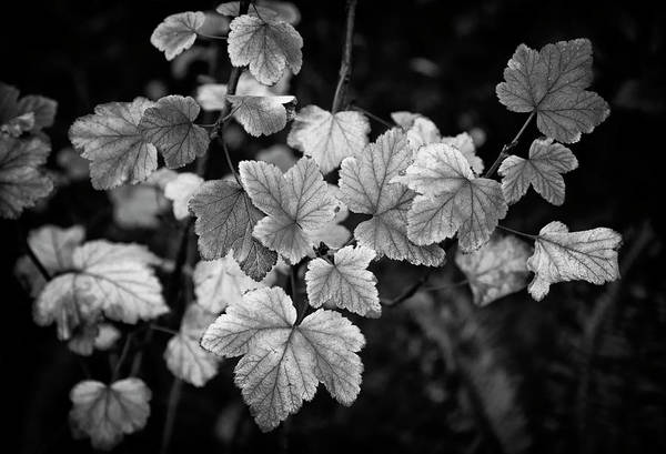 Photograph - Slipping Into Fall by Steven Clark