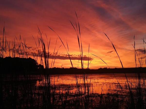 Photograph - Slough Sunrise by James Peterson