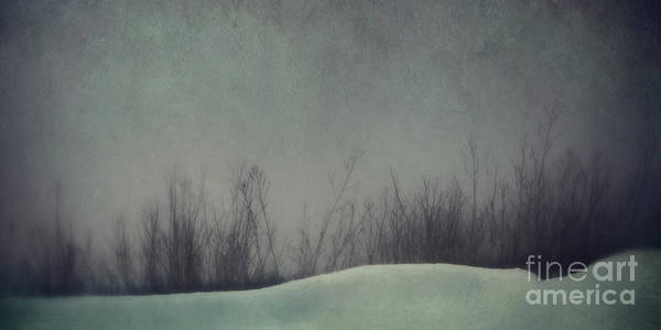 Wall Art - Photograph - Slumber by Priska Wettstein