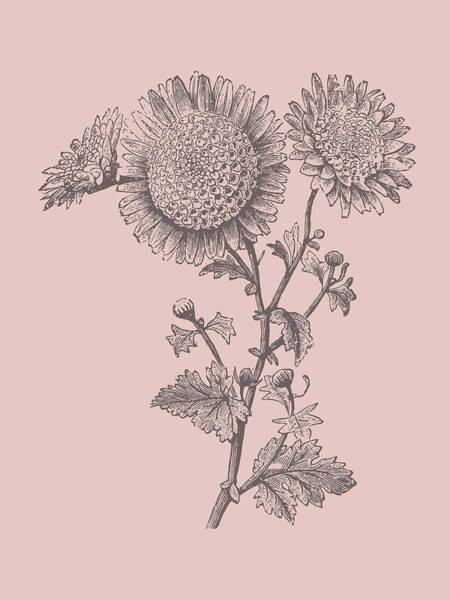 Love Mixed Media - Small Anemone Blush Pink Flower by Naxart Studio
