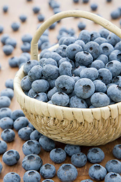 Messier Object Photograph - Small Basket Of Harvested Blueberries by Claire Higgins