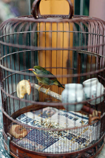 Cage Photograph - Small Bird In A Cage At A Bird Market by Christian Aslund