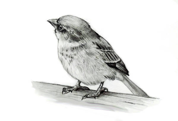 Wall Art - Drawing - Small Bird by Joyce Geleynse