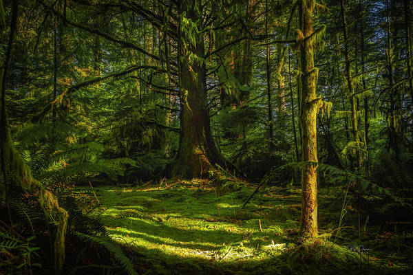 Photograph - Small Clearing by Bill Posner