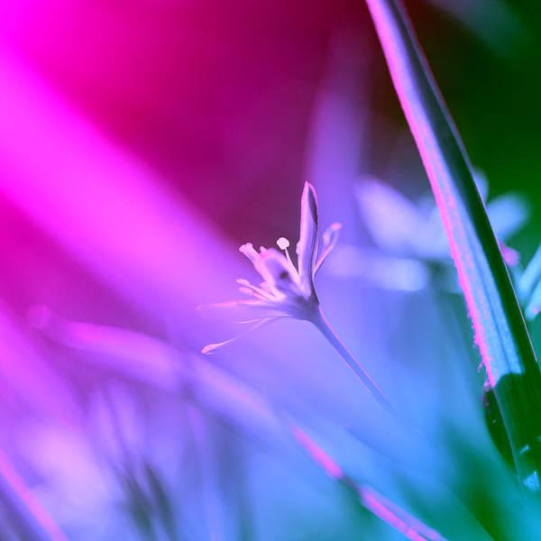 Wall Art - Photograph - Small Flower And Green Grass by Kertlis