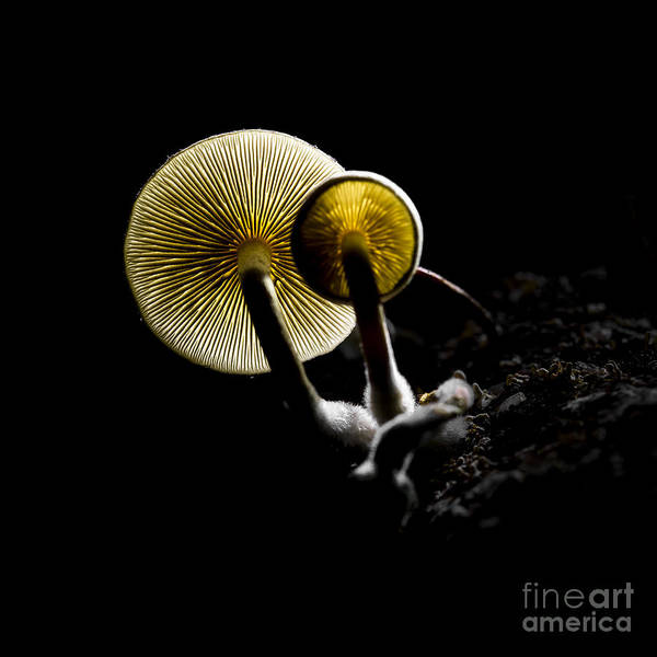 Raw Wall Art - Photograph - Small Fungus Growing On The Dead Wood by Martin Janca