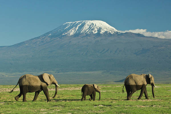Kilimanjaro Photograph - Small Herd Of African Elephants by Daryl Balfour