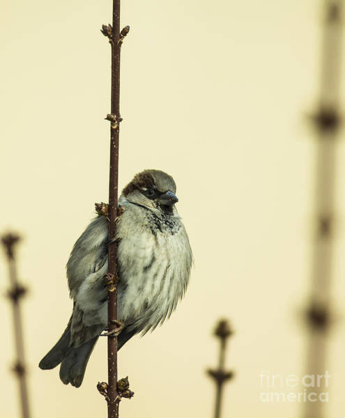 Wall Art - Photograph - Small Passerine Bird Sitting On The by Martin Janca