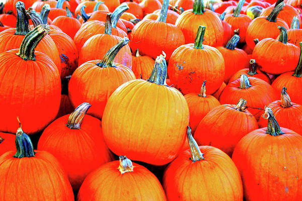 Photograph - Small Pumpkins by Cynthia Guinn