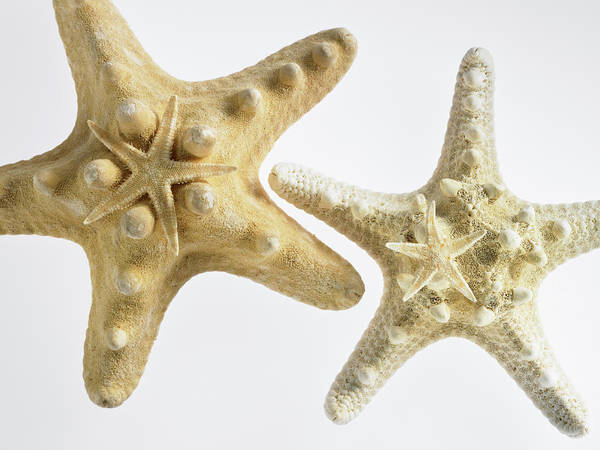 Side-by-side Photograph - Small Sugar Star On Top Of Thorny Star by Southern Stock