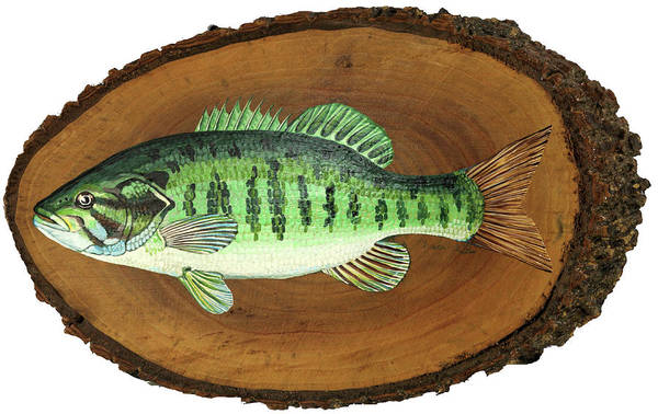 Painting - Smallmouth Bass - Still Swimmin by Phil Chadwick