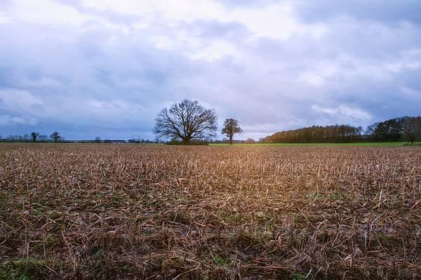 Photograph - Smell Of The Earth 3 by Jaroslav Buna