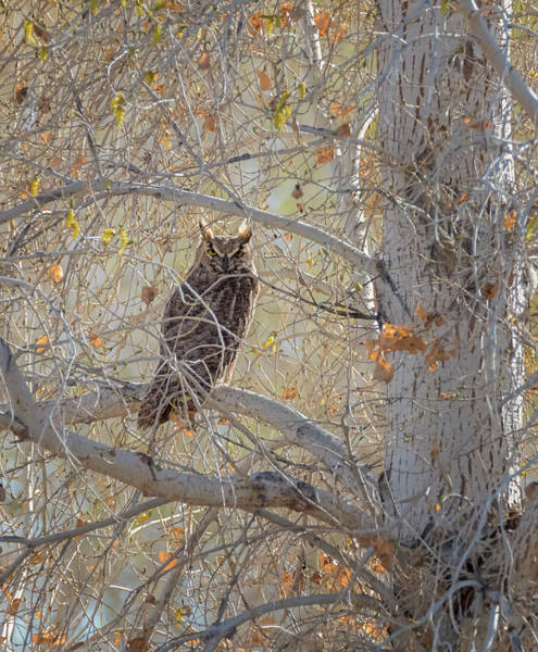 Photograph - Smiling Owl by Loree Johnson