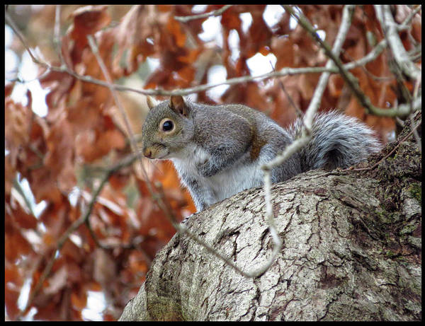 Photograph - Smiling Squirrel by Denise Beverly