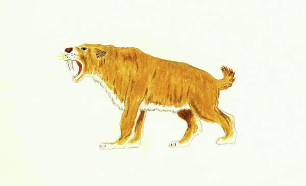 Smilodon Wall Art - Painting - Smilodon The Sabre Tooth Cat by Michael Vigliotti
