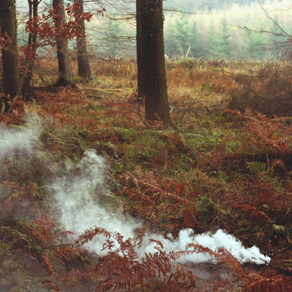 Environmental Issue Wall Art - Photograph - Smoke Forest by Michael Sullivan