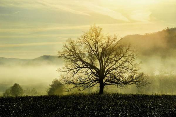 Photograph - Smokey Mountain Misty Tree Dsc_0396 by Michael Thomas