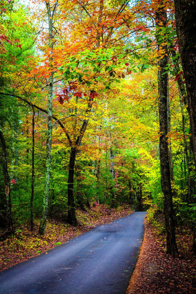 Photograph - Smoky Mountain Autumn Colors by Debra and Dave Vanderlaan