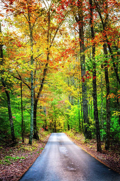 Photograph - Smoky Mountain Autumn by Debra and Dave Vanderlaan