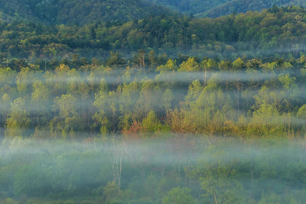 Photograph - Smoky Mountain Fog In Trees by Dan Sproul