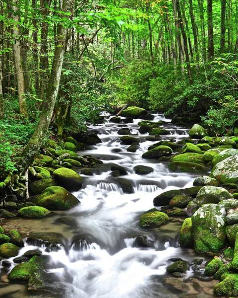 Wall Art - Photograph - Smoky Mountain Paradise by Frozen in Time Fine Art Photography