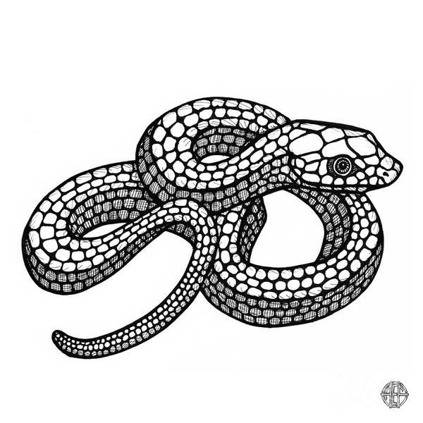 Smooth Green Snake Art Print