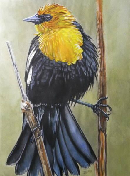 Painting - Smug by Barbara Keith