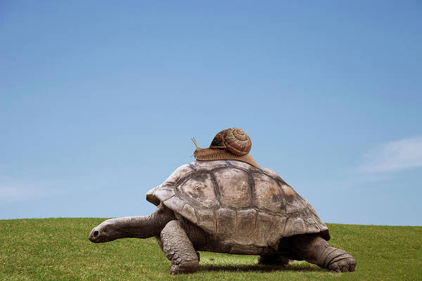 Determination Photograph - Snail Over A Turtle by Buena Vista Images