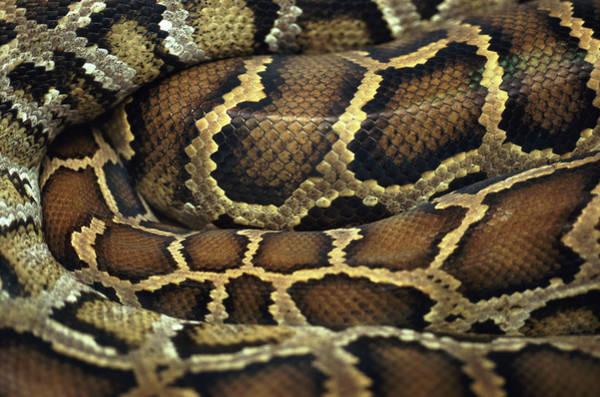 Snake Photograph - Snake by John Foxx
