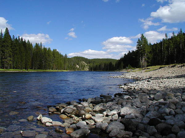 Snake Photograph - Snake River With The Forest On A Clear by Drflet