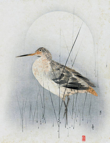 Painting - Snipe by Hotei