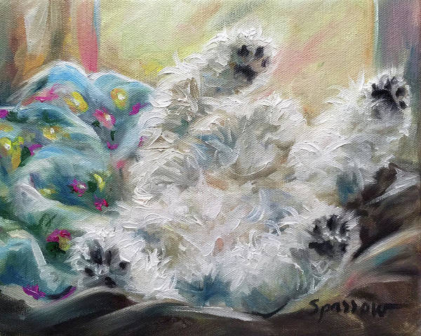 Maltipoo Wall Art - Painting - Snoozing by Mary Sparrow