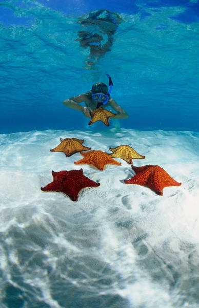 Snorkel Photograph - Snorkeller Looking At Cusion Sea Stars by Michael Lawrence