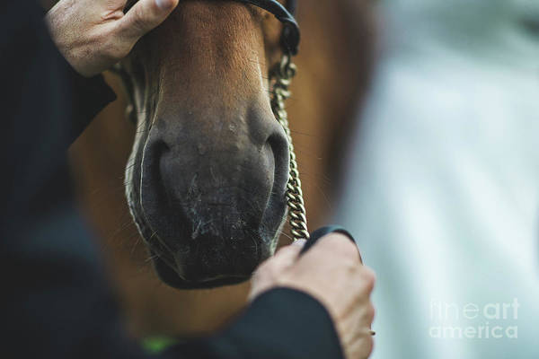 Photograph - Snout Of Horse Fastened By The Rider, Close-up. by Joaquin Corbalan