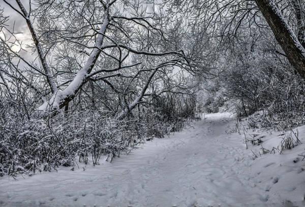 Photograph - Snow 1 #i3 by Leif Sohlman